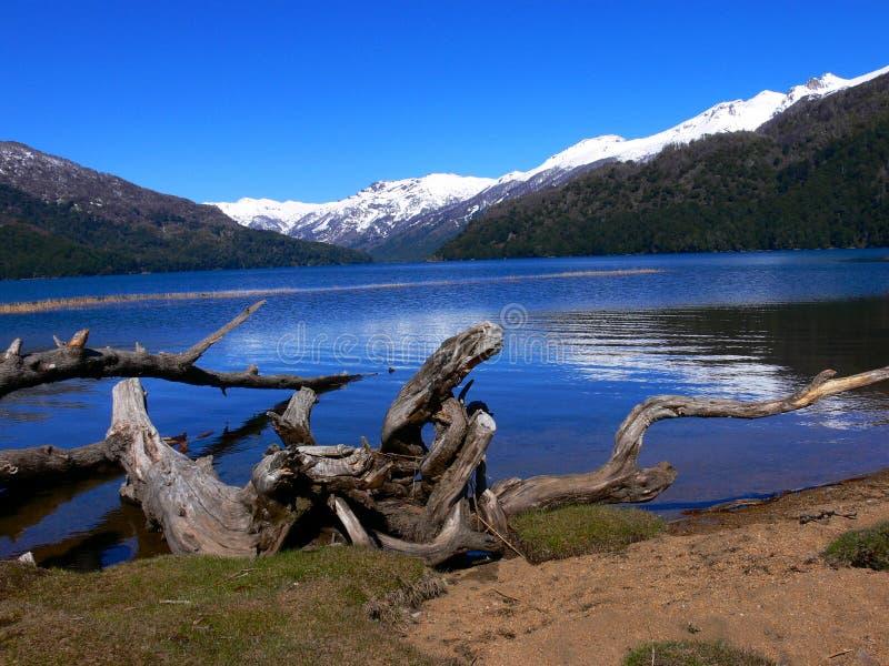 停止的湖结构树 免版税图库摄影