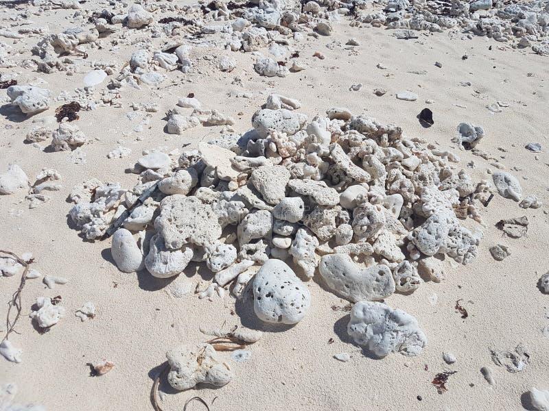 停止的珊瑚 免版税库存图片