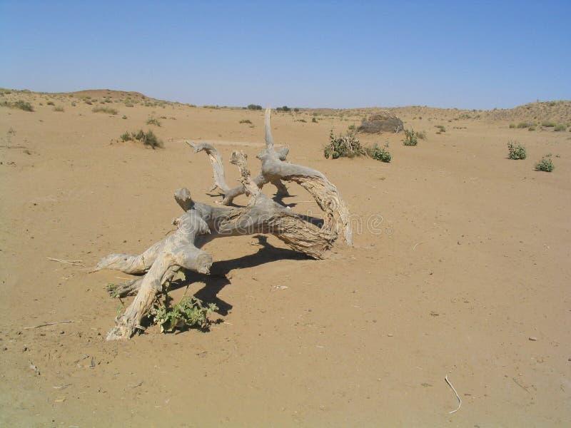 停止的结构树在沙漠 免版税库存图片