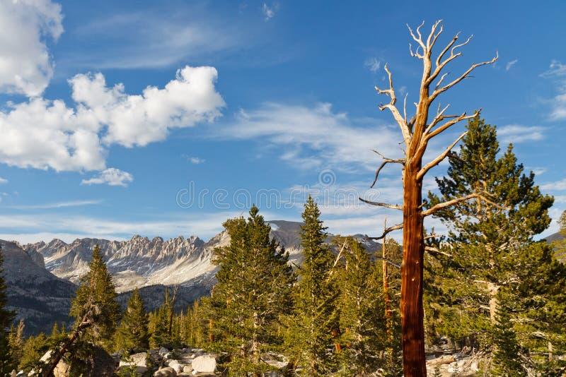 停止的结构树在高山脉 免版税库存图片