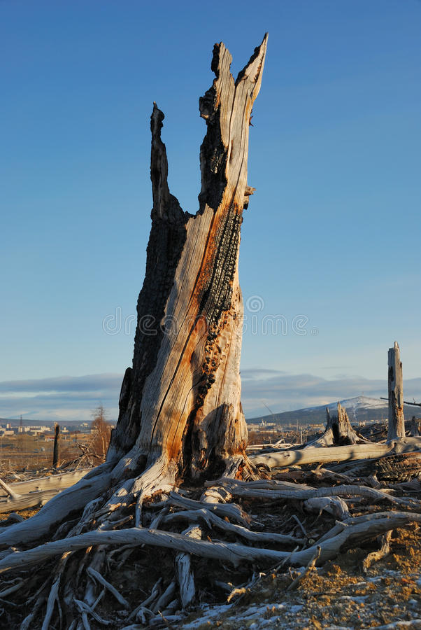 停止的结构树 免版税库存照片