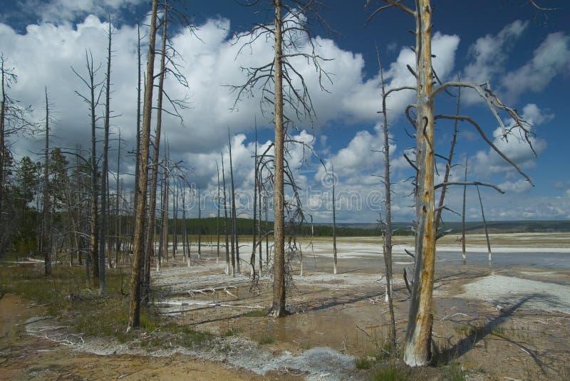 Download 停止的结构树 库存照片. 图片 包括有 森林地, 公园, 本质, 国家, 结构树, 木头, 地形, 亚马逊, 怀俄明 - 63492