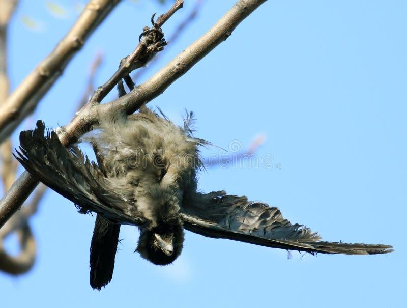 停止的鸟 免版税库存照片