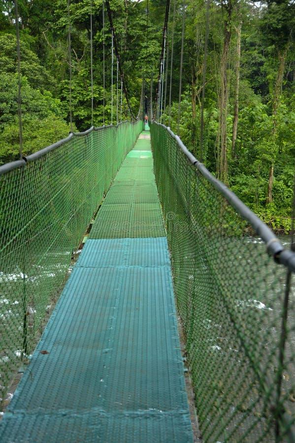停止脚桥梁在哥斯达黎加准许探索雨林生态系的生物多样性在Tirimbina生物储备的 库存照片