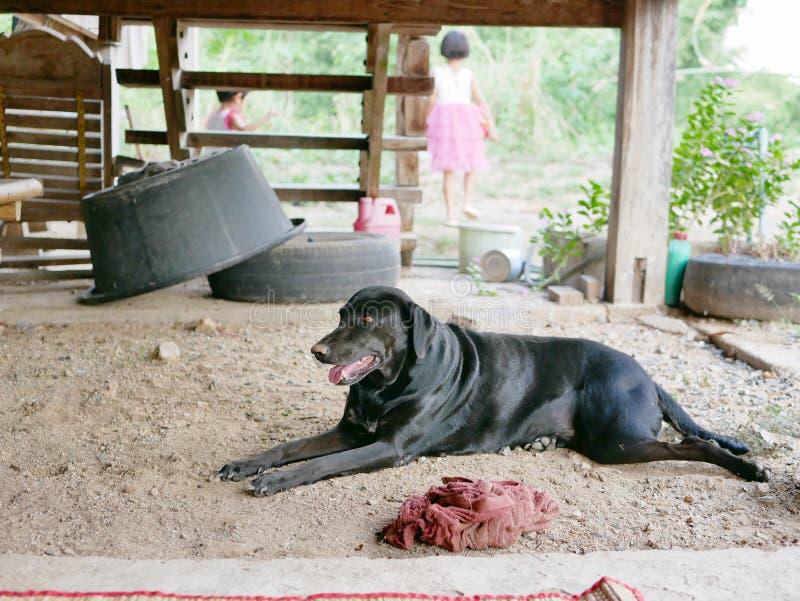 停留在一个老泰国式木房子的一间被上升的地下室的下沮丧农村的 库存图片