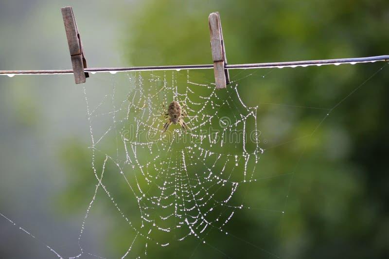 停留我的蜘蛛网烘干 免版税库存图片