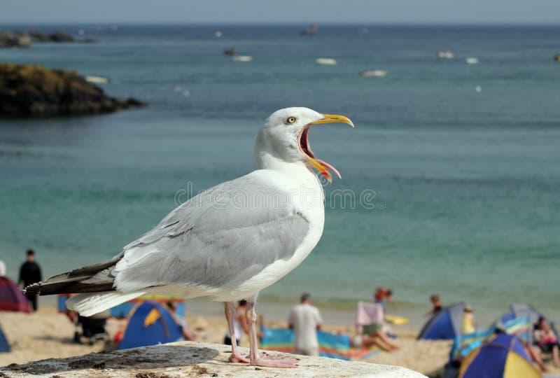 停留舌头的嘴开放海鸥 库存图片