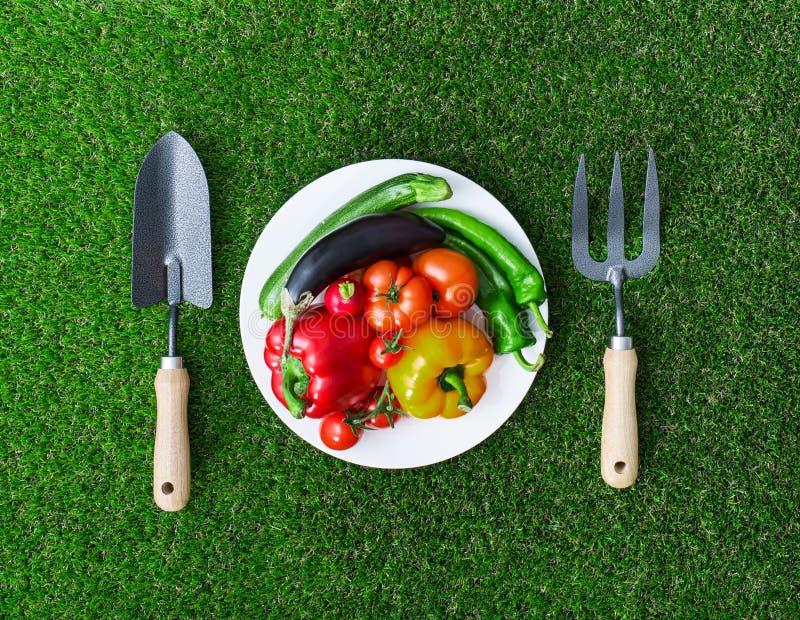 健康吃和园艺 库存照片