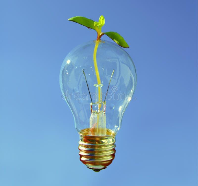 健康和可持续发展的,有通过小的植物的发光的电灯泡新主意 库存照片