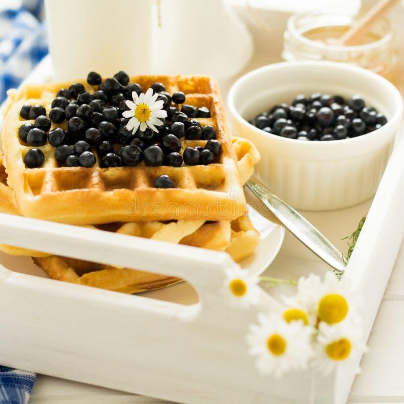 健康早餐:比利时华夫饼干用蓝莓、蜂蜜和牛奶装饰了在白色木盘子的春黄菊花 库存照片
