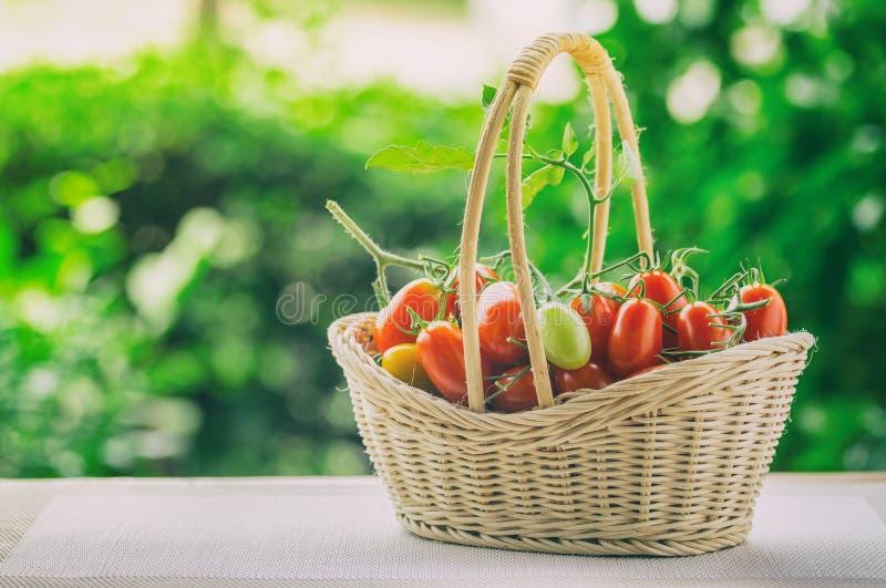 健康果子用在一个竹篮子的新鲜的红色甜蕃茄