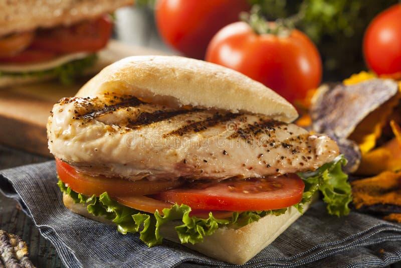 健康烤鸡肉三明治 库存图片