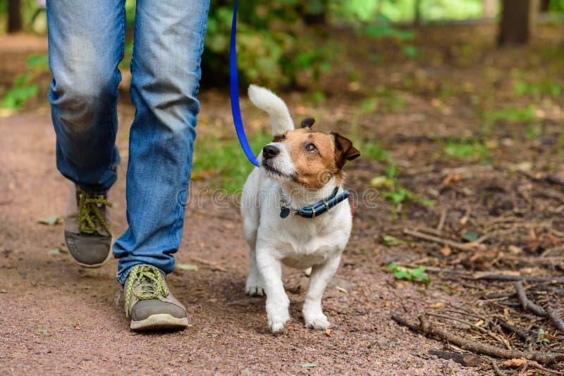 健康生活方式的概念与狗和人远足的室外 免版税库存图片