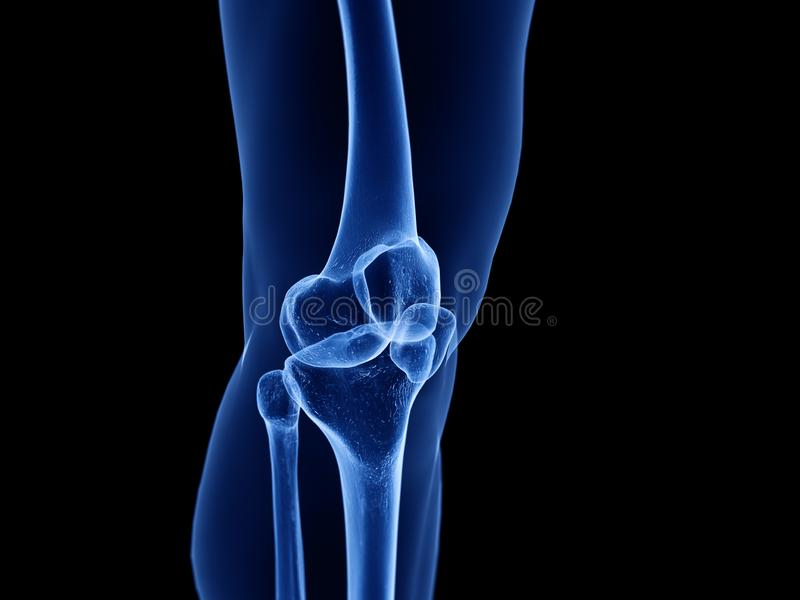 健康膝盖关节 向量例证