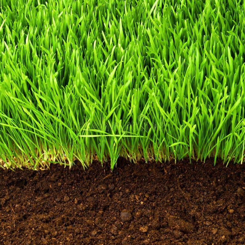 健康草和土壤 免版税库存图片