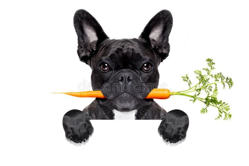 健康食物狗 库存图片