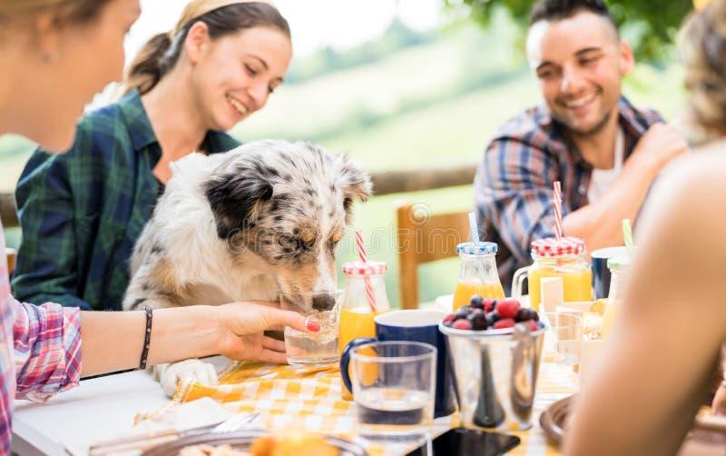健康pic nic早餐的年轻人与在获得乡下农厂家的愉快的朋友的millennials的逗人喜爱的狗乐趣一起 库存照片
