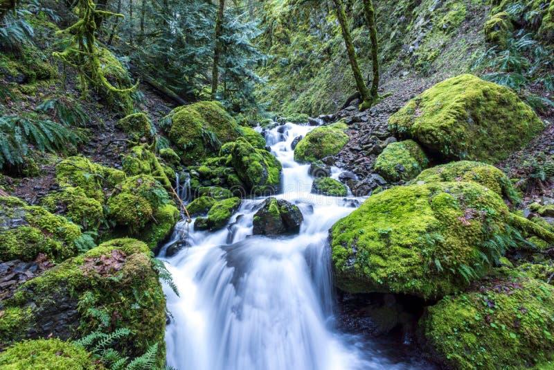 偶象青苔盖了岩石在小河在俄勒冈,哥伦比亚河峡谷受游人欢迎 免版税库存图片