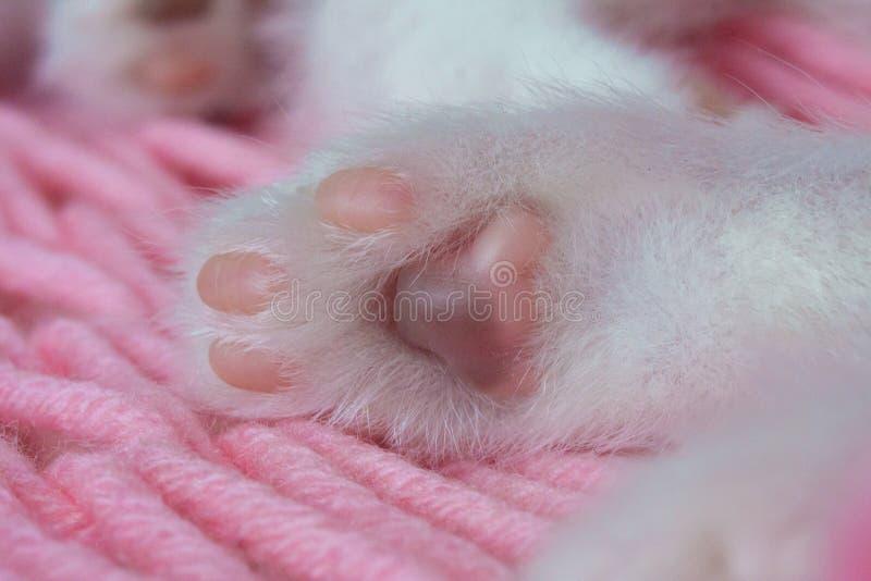 偷偷地走特写镜头 猫垫 小猫的腿 动物身体局部 库存图片