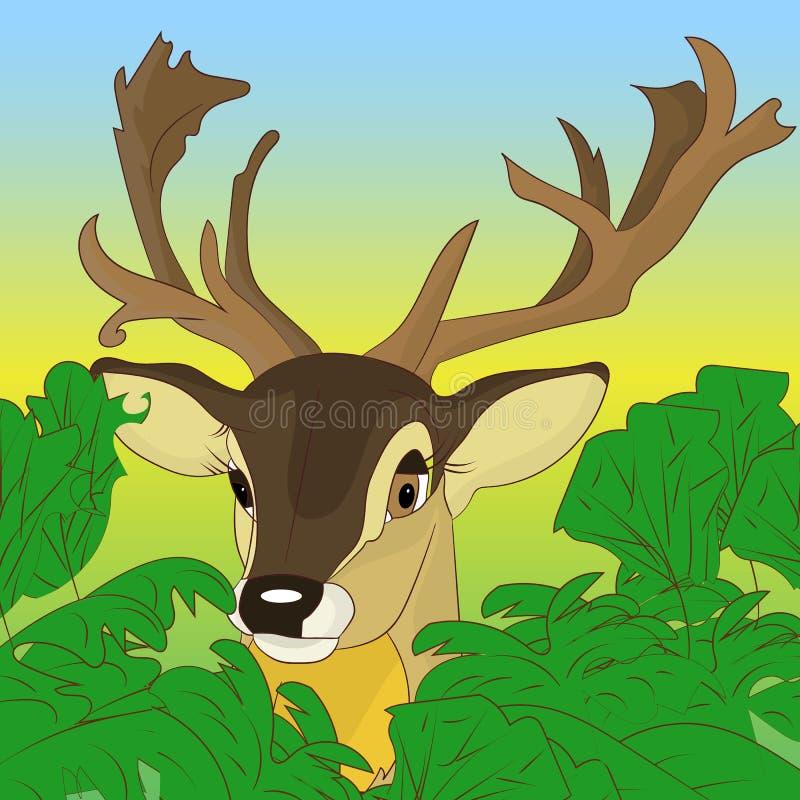 偷看在绿色灌木外面的鹿的头在森林, cartoo里 库存例证