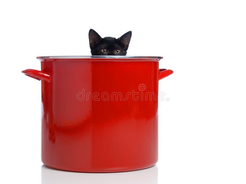 偷看罐的小猫 免版税库存图片