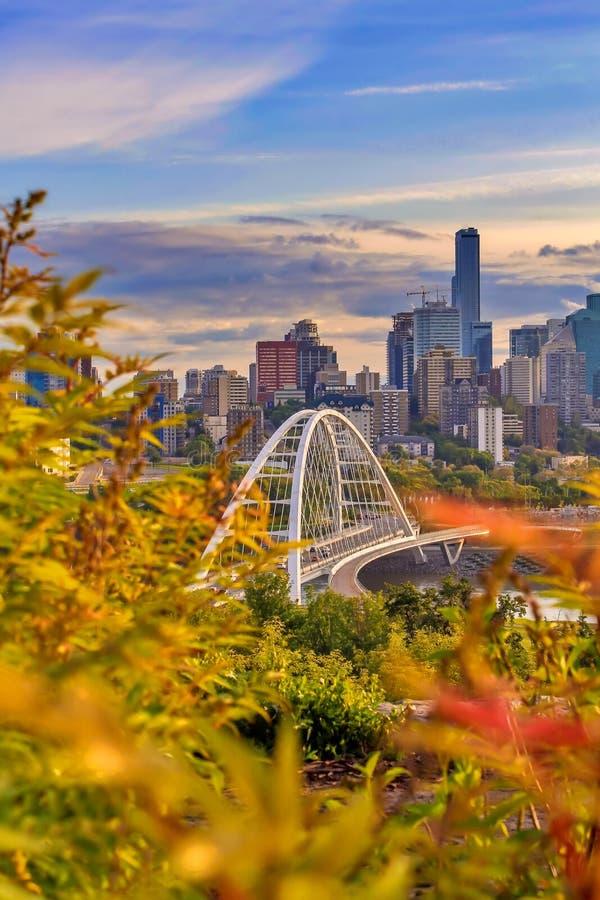 偷看通过叶子的城市 库存图片