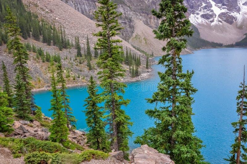 偷看通过针叶树树对湖冰碛美好的颜色 免版税图库摄影