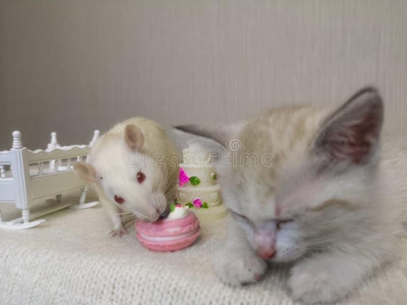 偷窃的概念 老鼠窃取从睡觉猫的食物 免版税库存照片