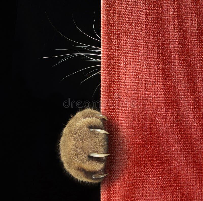 傀儡和颊须在红色书后 库存图片