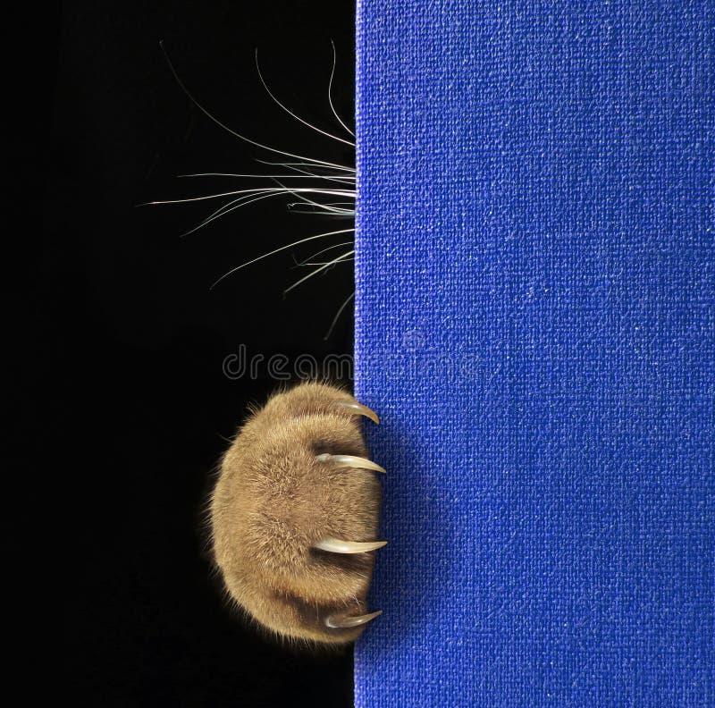 傀儡和颊须在蓝皮书后 库存图片