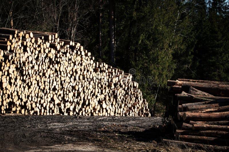 储蓄云杉的被锯的木材 图库摄影