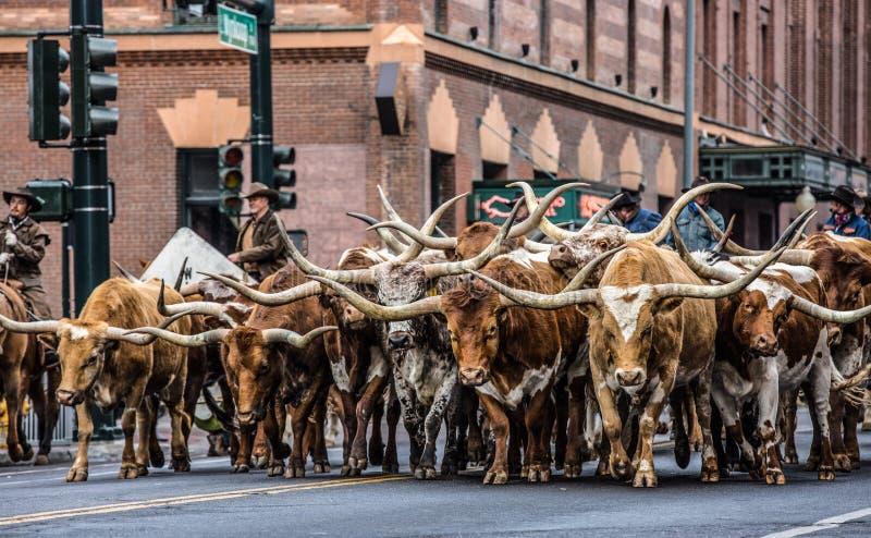 储蓄展示游行公牛 免版税图库摄影