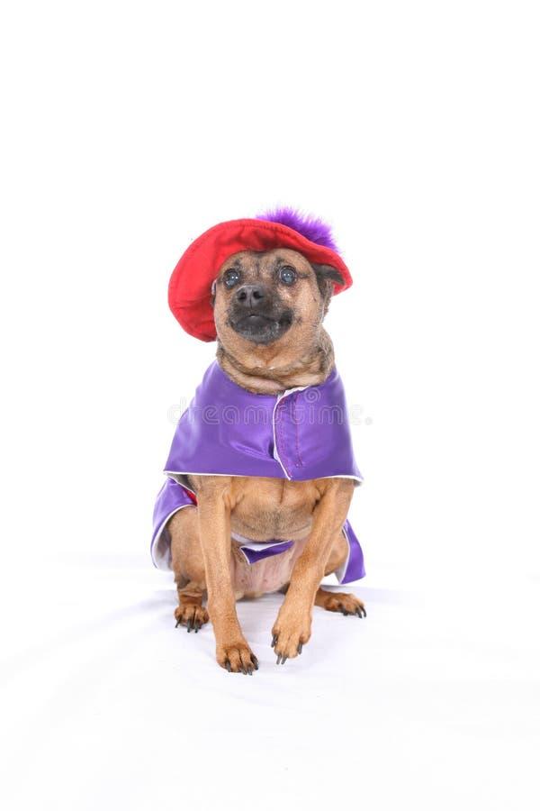 傻服装的狗 库存图片