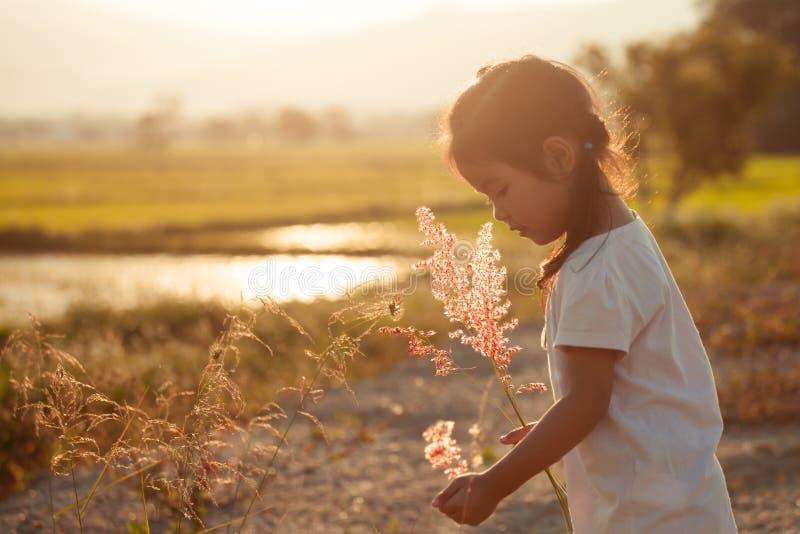 儿童亚裔小女孩在草甸收集草花 免版税库存照片