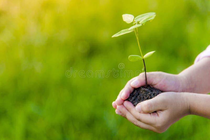 儿童作为土壤的植物树和幼木在小孩子的手上 免版税库存照片