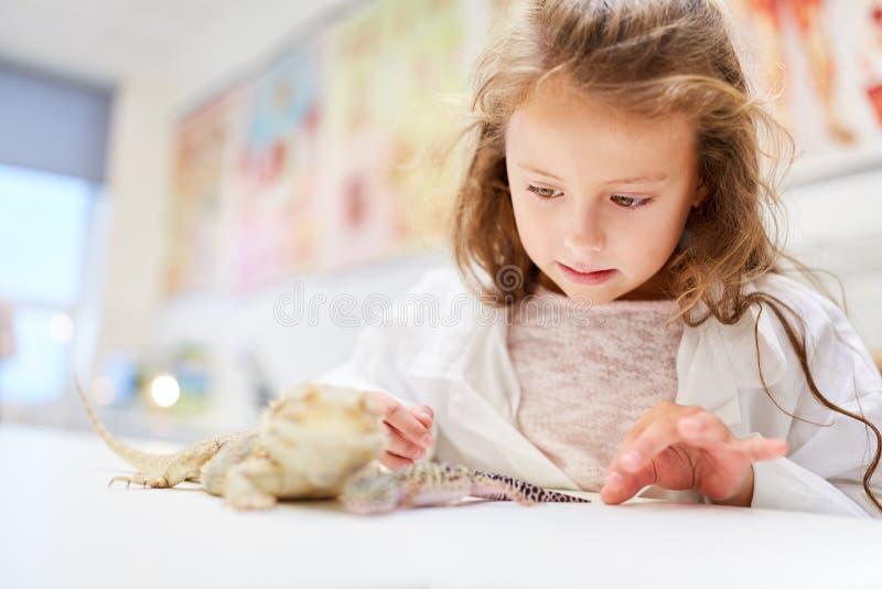 儿童供应爬行动物在学校的实验室 库存照片
