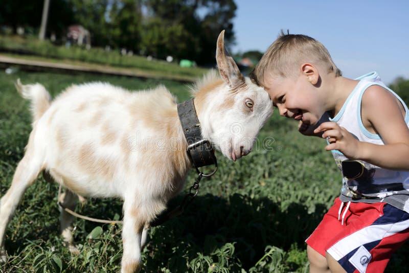 儿童和山羊用头撞 库存照片