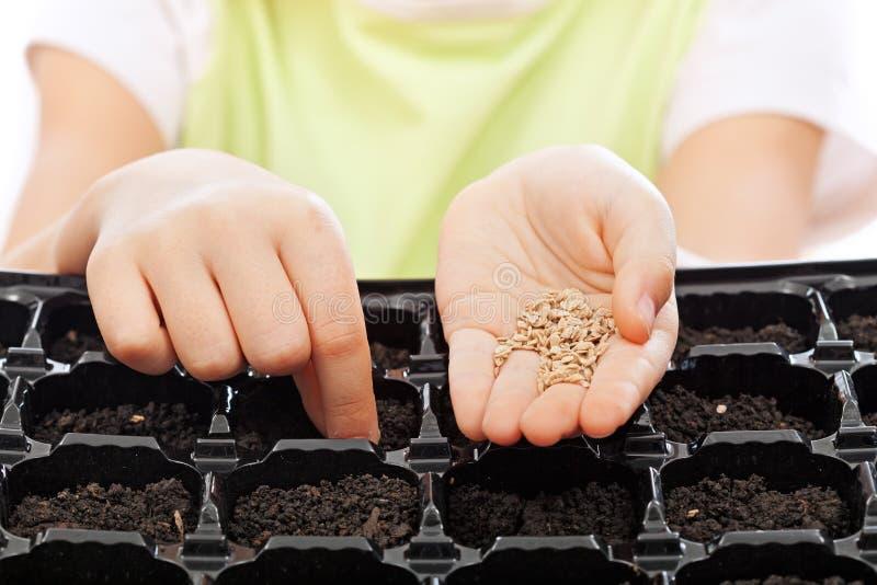 儿童播种种子到萌芽盘子里 免版税库存图片