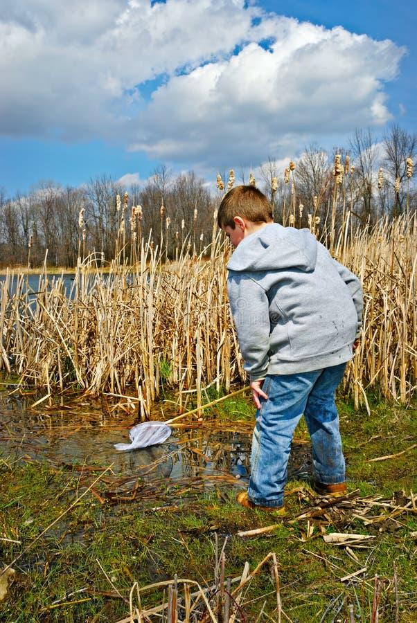 儿童测试的沼泽 库存图片