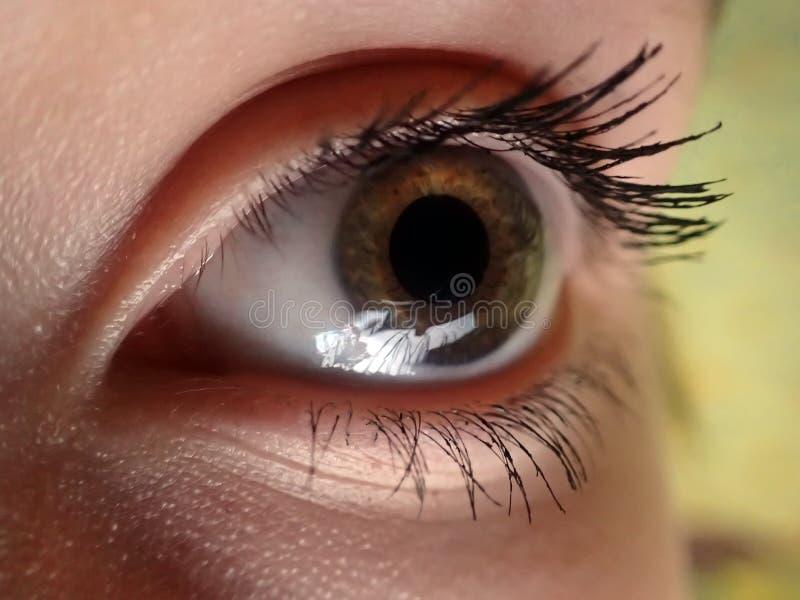 儿童特写镜头的眼睛与被绘的睫毛的 库存照片