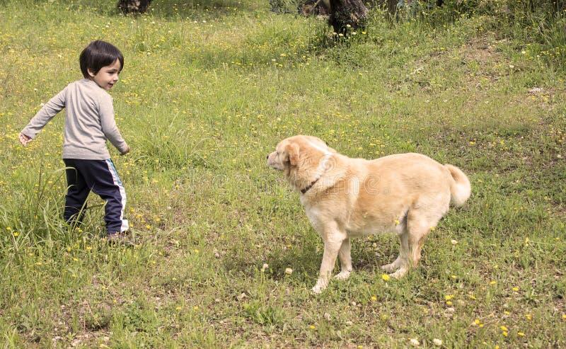 儿童狗使用 库存照片
