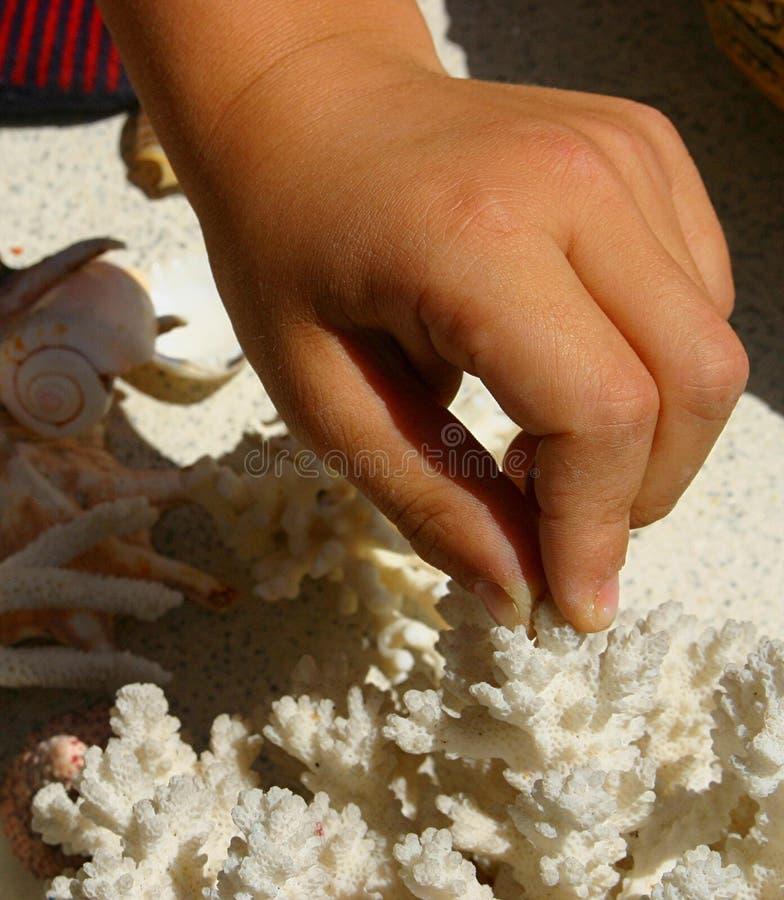 Download 儿童珊瑚手指涉及 库存图片. 图片 包括有 研讨, 涉及, 菲律宾, 喜悦, 热带, 概念性, 无罪, 概念 - 184815