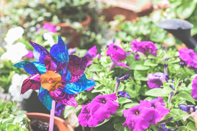 儿童的玩具风车在庭院或围场,五颜六色的玩具在家庭菜园花床上 图库摄影