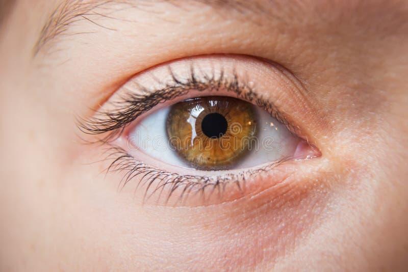 儿童的眼睛特写镜头,棕色 图库摄影