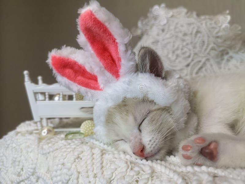 儿童的睡眠的概念 在兔子耳朵的猫 ?? 库存图片