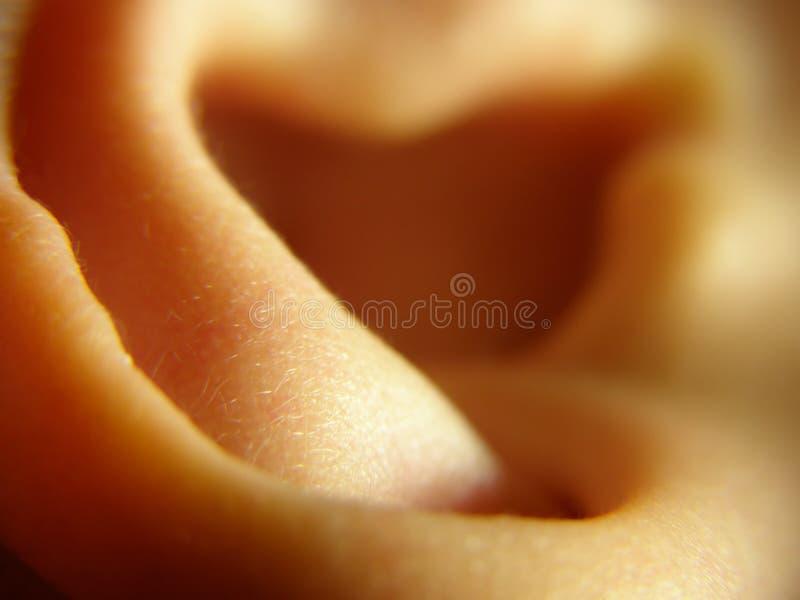 儿童耳朵 免版税库存照片