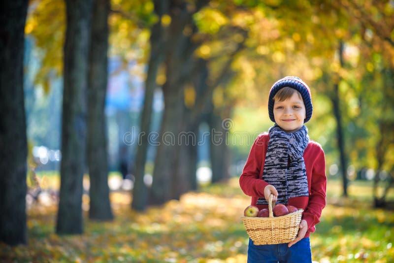 儿童采摘苹果在秋天 使用在苹果的小男婴 库存照片