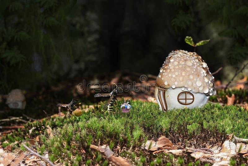 儿童` s故事在清洁的一个密集的森林里关于昆虫怎样去参观 免版税库存照片