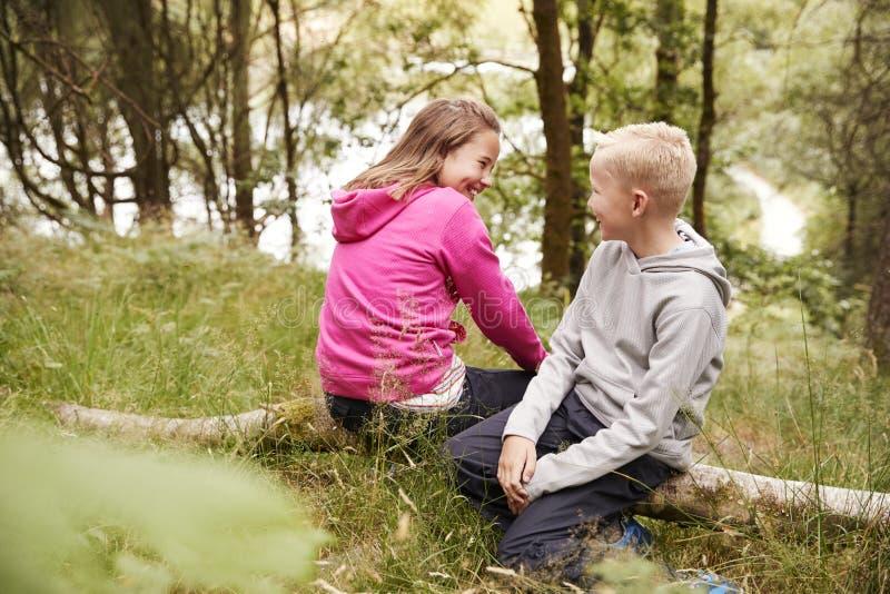 兄弟和姐妹一起坐一棵下落的树在森林,有选择性的看法里 免版税库存图片