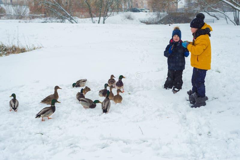 兄弟和姐妹喂养饥饿的鸭子用面包 免版税库存图片